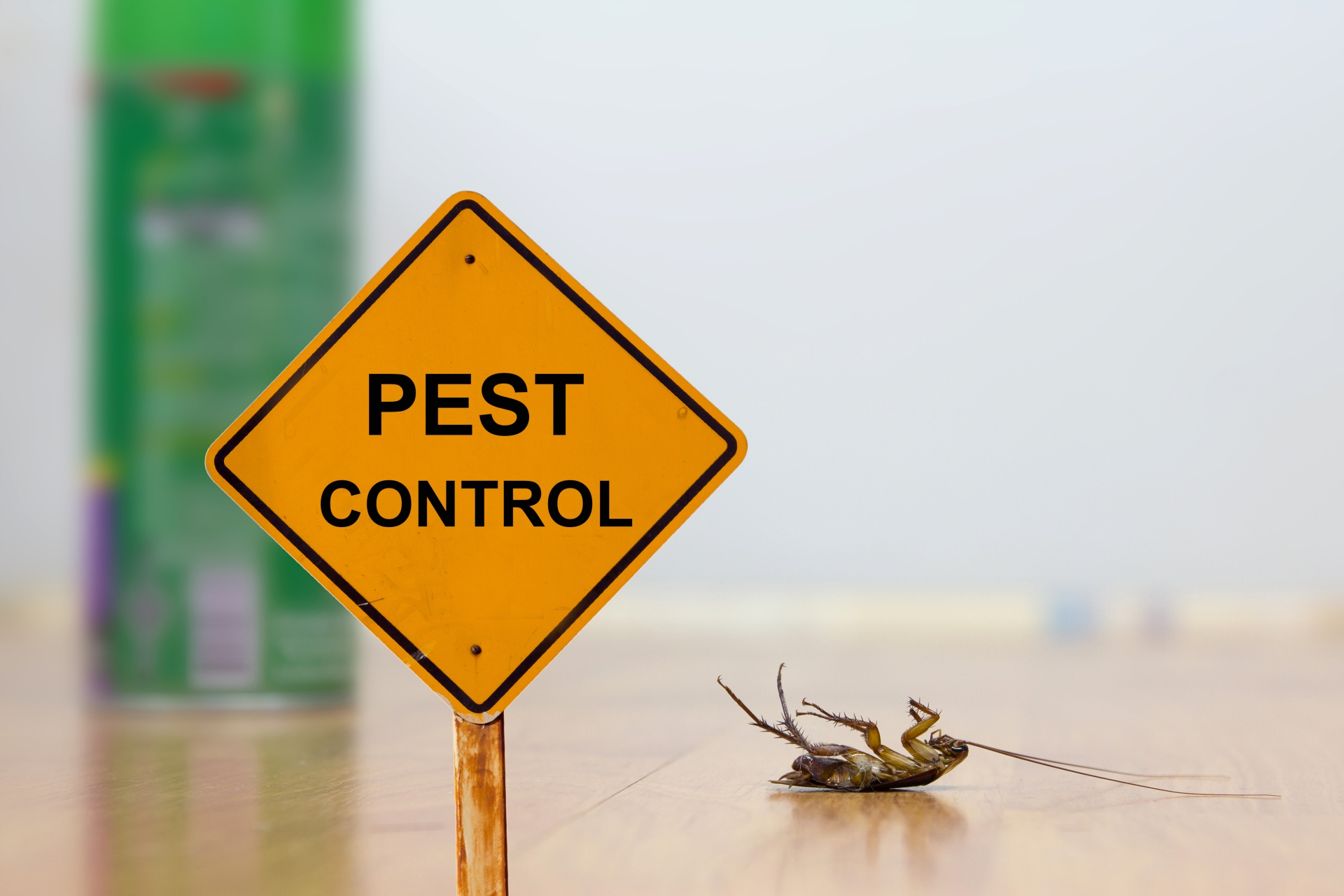 24 Hour Pest Control, Pest Control in Farningham, Eynsford, Horton Kirby, DA4. Call Now 020 8166 9746